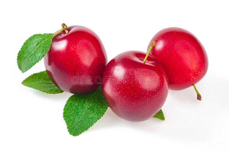 Tres frutas maduras, ciruelos rojos con las hojas, cierre para arriba En blanco fotografía de archivo libre de regalías