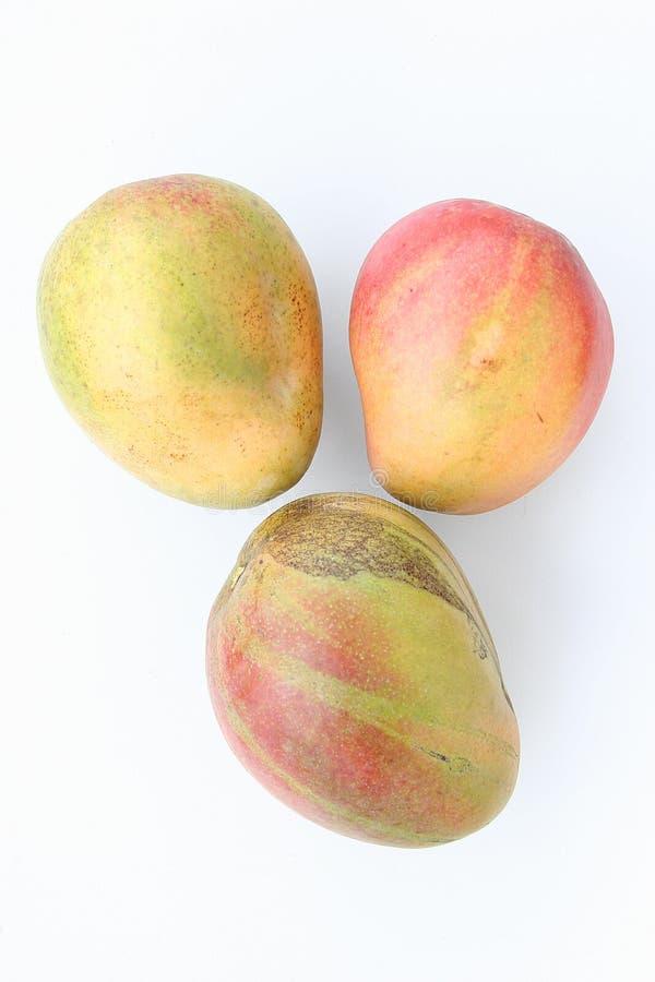 Tres frutas maduras del mango imágenes de archivo libres de regalías