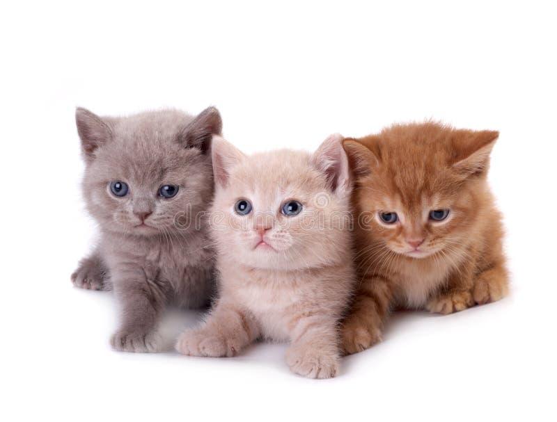 Tres gatitos foto de archivo