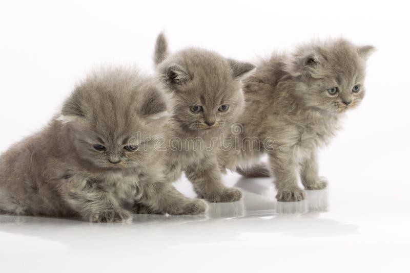 Tres gatitos foto de archivo libre de regalías