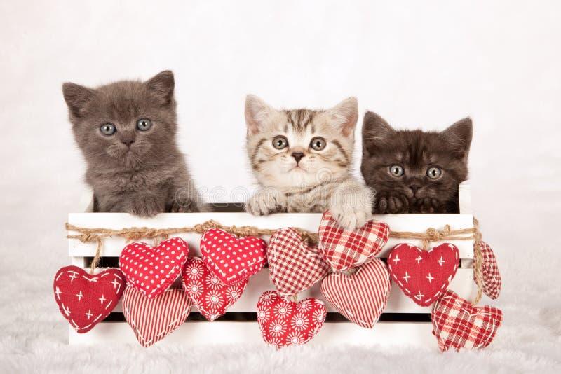 Tres gatitos de la tarjeta del día de San Valentín que se sientan dentro de un envase blanco adornado con los corazones de la tel imagen de archivo libre de regalías