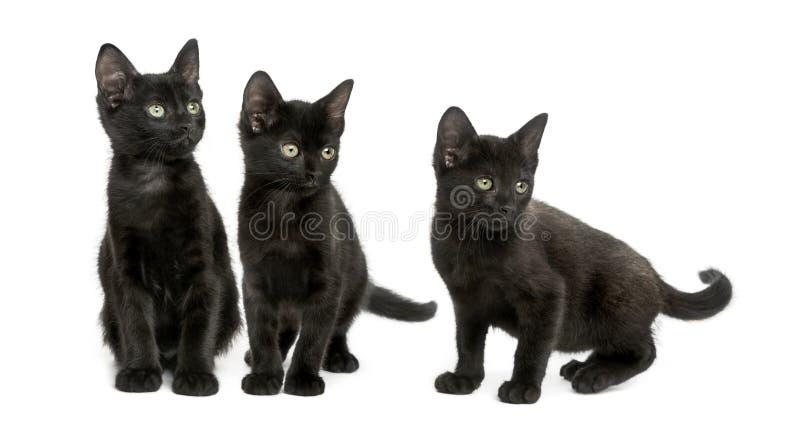 Tres gatitos negros que miran lejos, 2 meses, aislados imagen de archivo