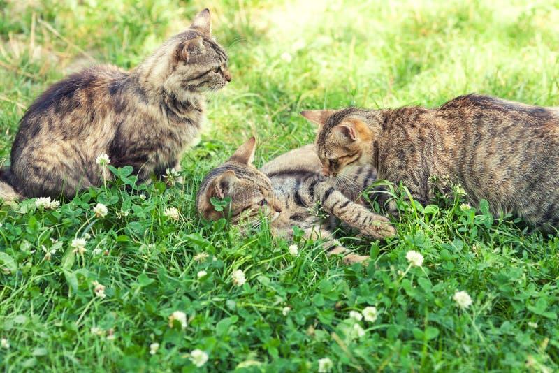 Tres gatos en la hierba fotografía de archivo