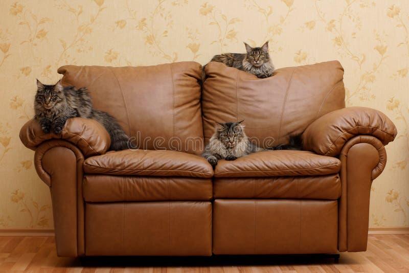 Tres gatos en un sofá imagenes de archivo