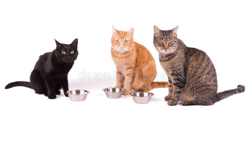 Tres gatos que sientan el behid sus cuencos de la comida imagen de archivo