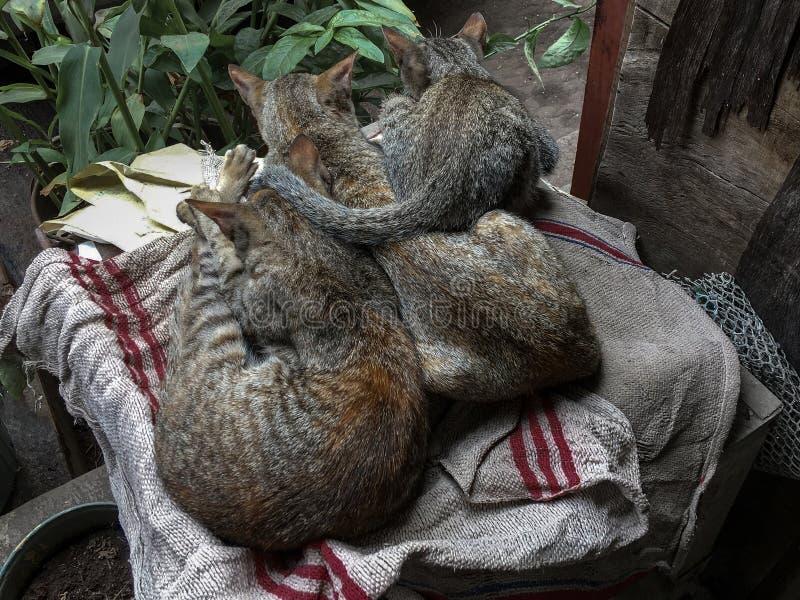 Tres gatos que toman siestas fuera del mirador imagen de archivo libre de regalías