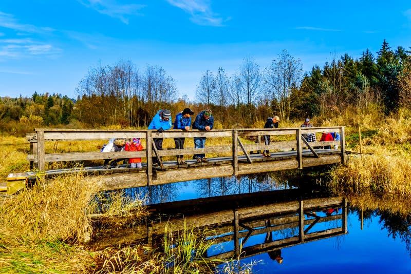 Tres generaciones de una familia en un puente en las pistas de senderismo de humedales de la cala de Silverdale, de un pantano de fotos de archivo libres de regalías