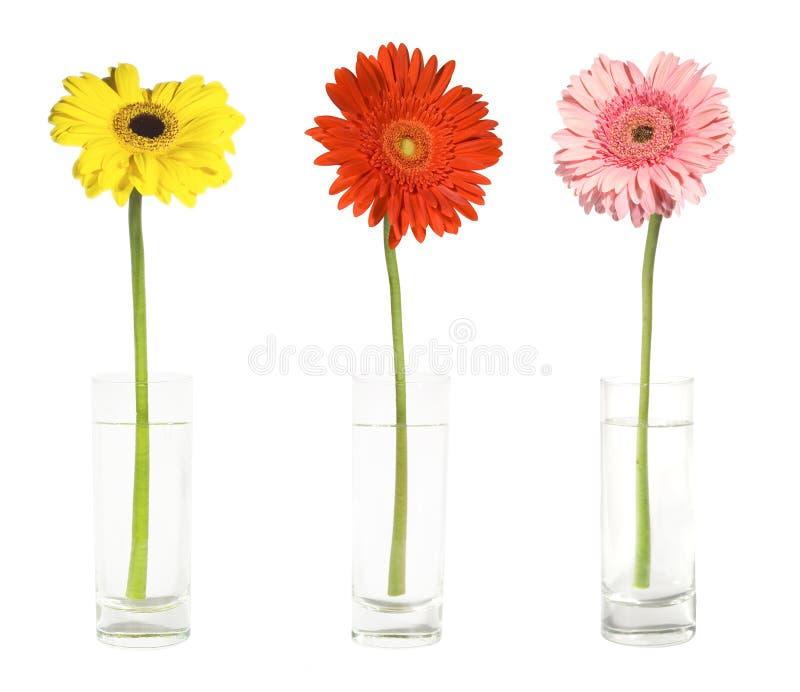 Tres gerbers en floreros fotografía de archivo