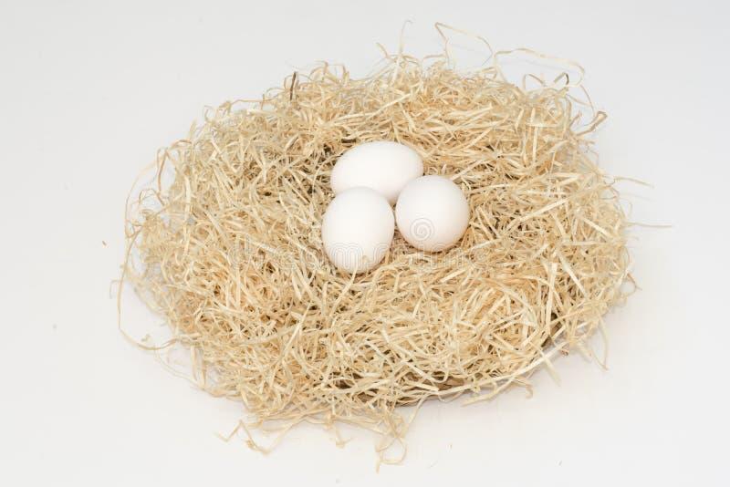 Tres huevos blancos del pollo en la jerarquía foto de archivo