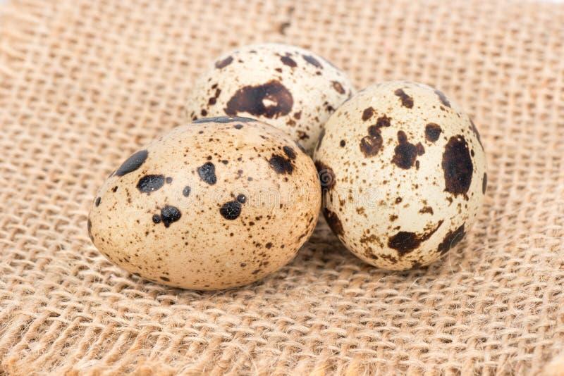 Tres huevos de codornices imagenes de archivo