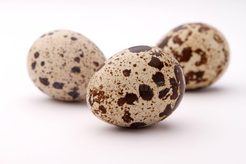 Tres huevos de codornices fotos de archivo