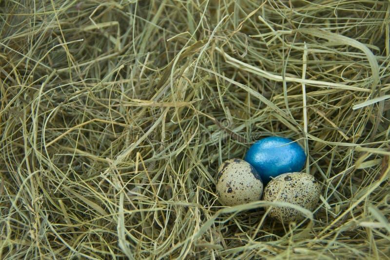 Tres huevos de codornices en el heno fotos de archivo libres de regalías
