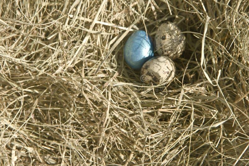Tres huevos de codornices en el heno imagen de archivo libre de regalías