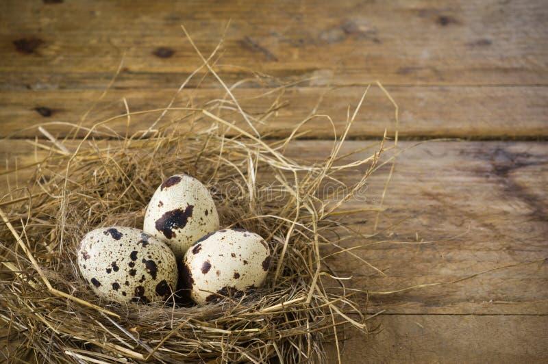 Tres huevos de codornices en la jerarquía foto de archivo libre de regalías