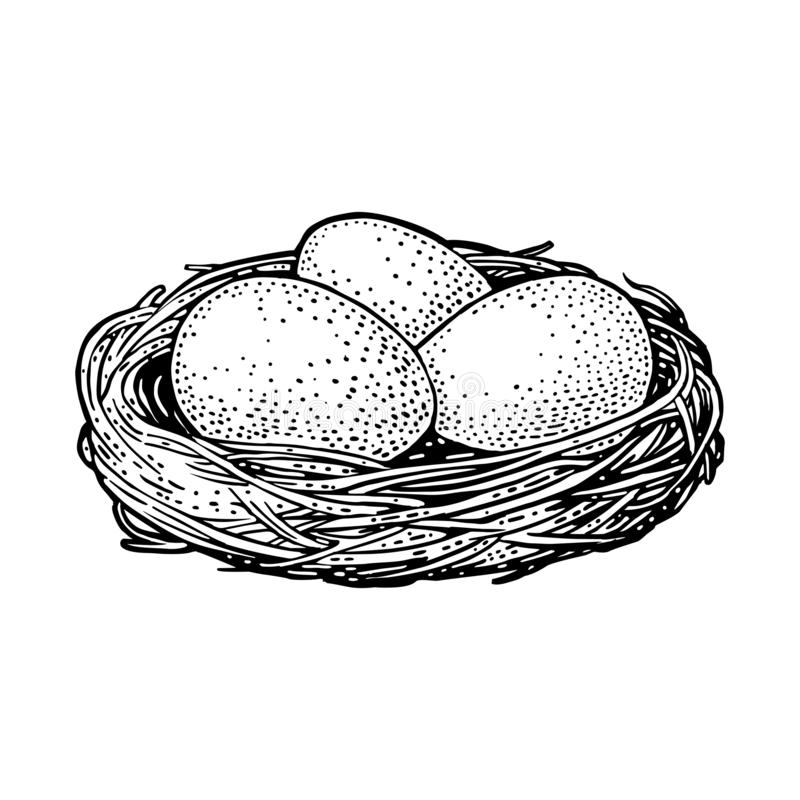 Tres huevos del p?jaro en el grabado del vintage del negro del vector de la jerarqu libre illustration