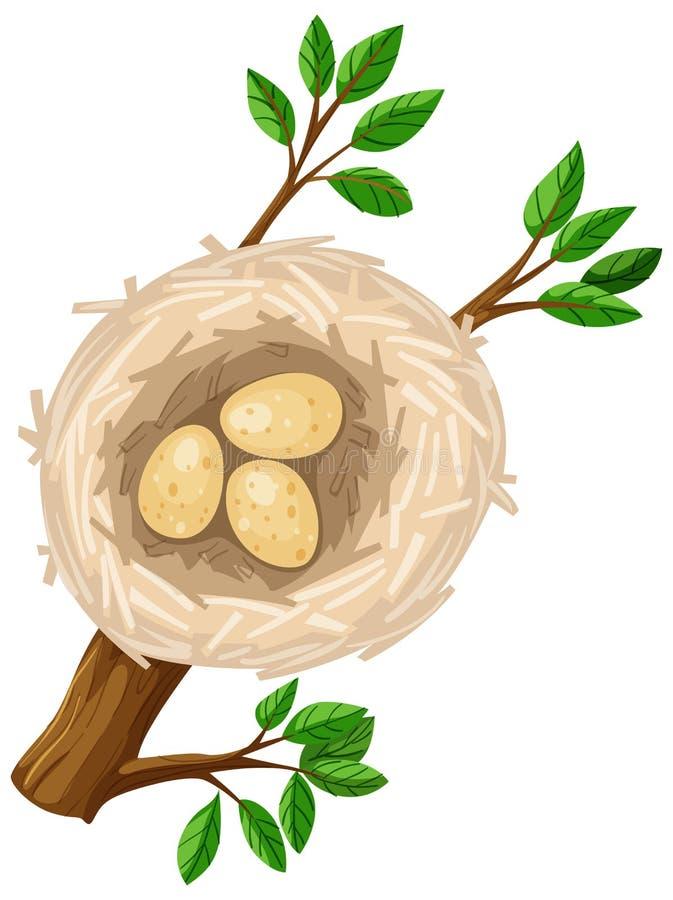 Tres huevos en jerarquía del pájaro stock de ilustración