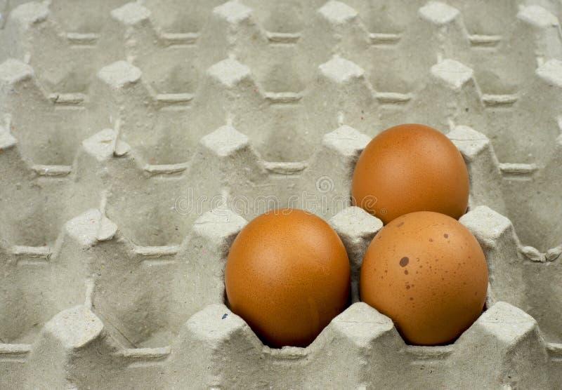 Tres huevos en la bandeja del papel imagenes de archivo