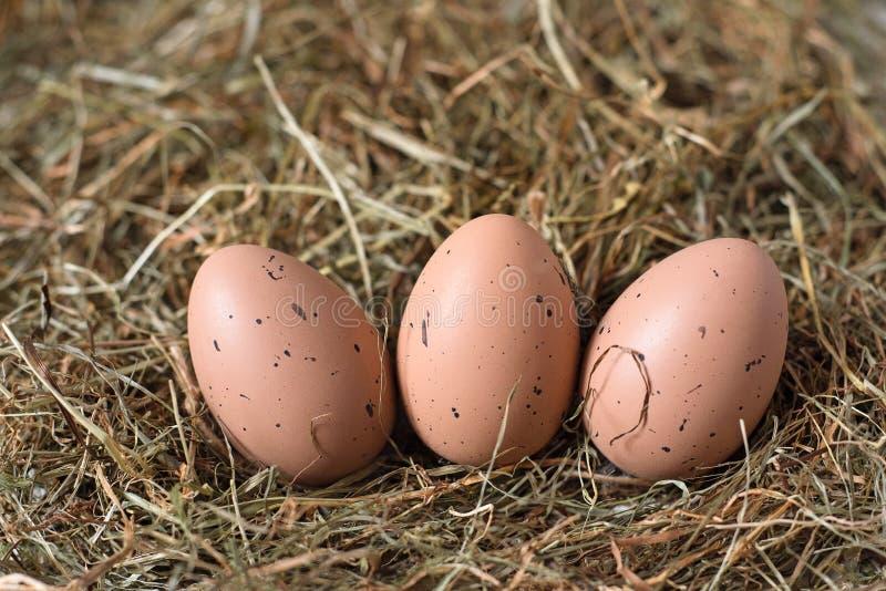 Tres huevos marrones con los puntos negros están mintiendo en el heno fotos de archivo libres de regalías