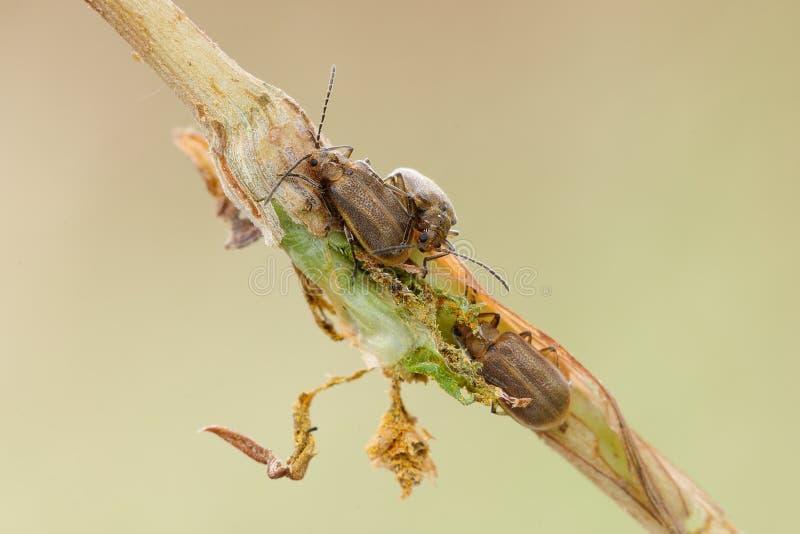 Tres insectos foto de archivo libre de regalías