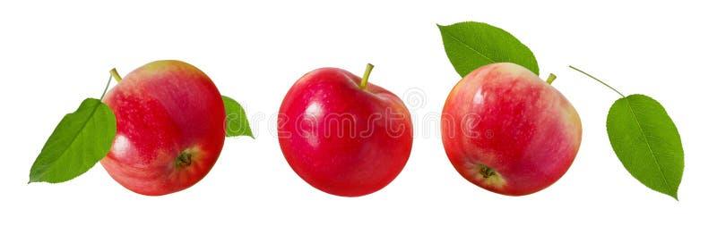 Tres manzanas enteras rojas maduras con las hojas verdes aisladas en el fondo blanco, sistema para el diseño de empaquetado imagen de archivo libre de regalías