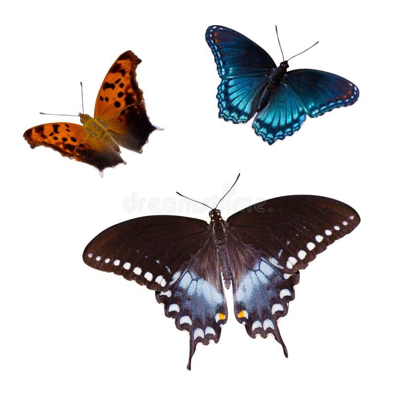 Tres mariposas imagen de archivo