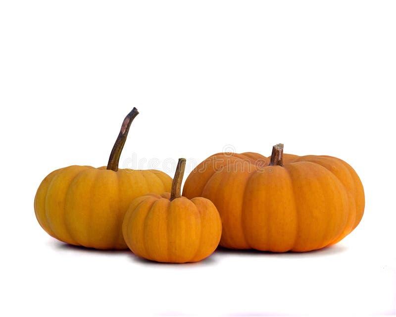 Tres Mini Pumpkins en blanco foto de archivo