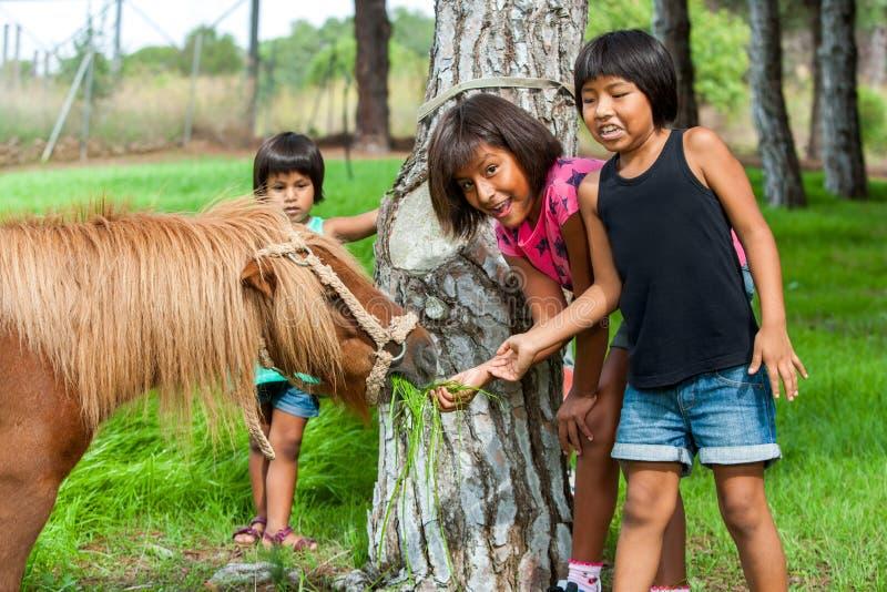 Tres muchachas que alimentan el potro en granja. fotografía de archivo