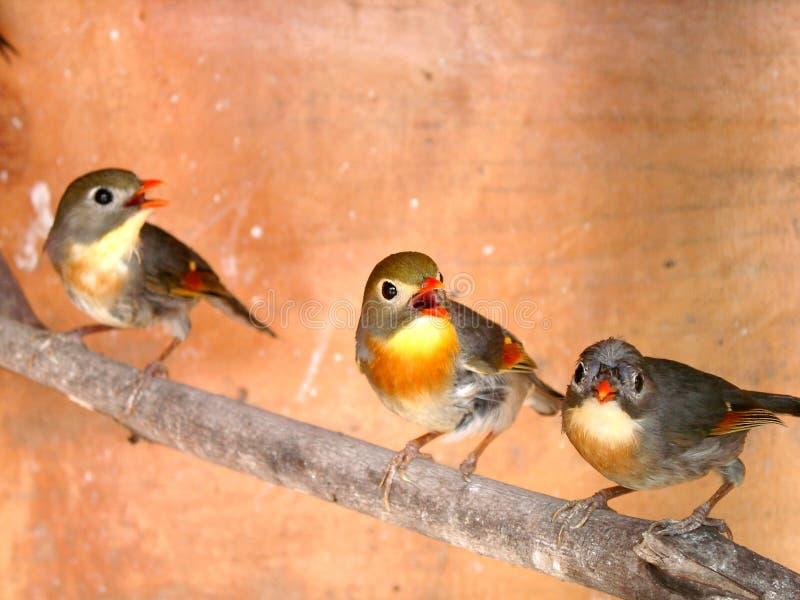 Tres pájaros fotos de archivo