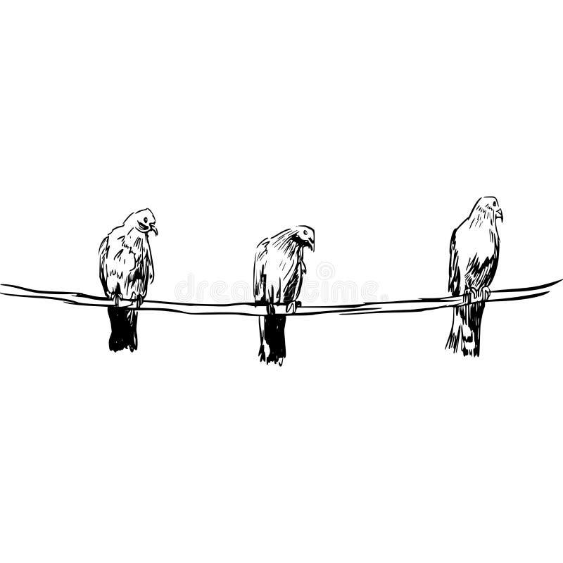 Tres pájaros en una cuerda libre illustration