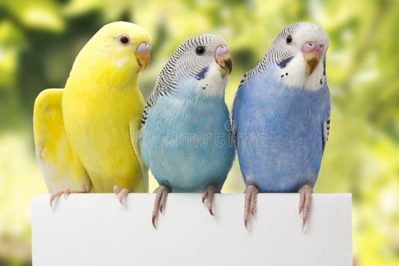 Tres pájaros están en un fondo blanco fotos de archivo