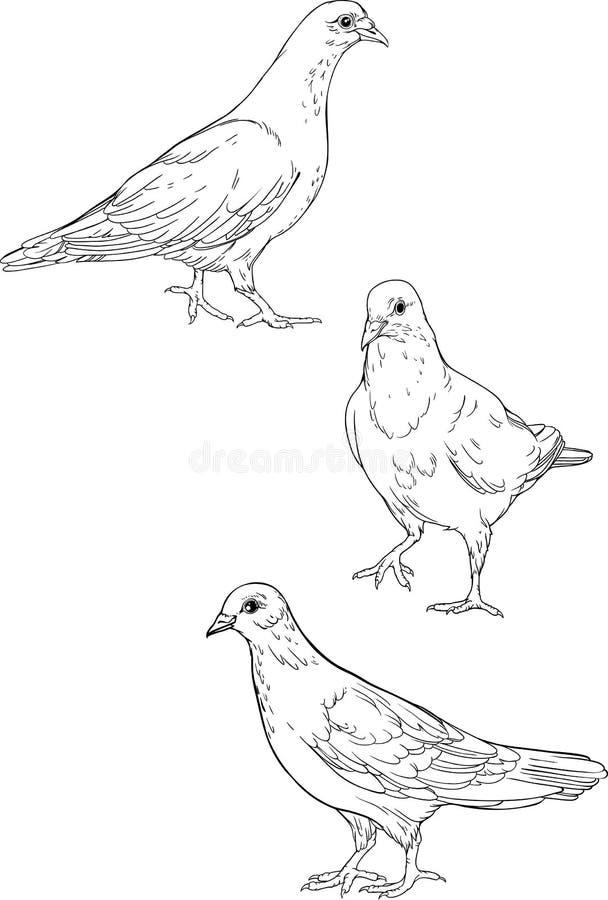 Tres palomas aisladas Página que colorea libre illustration
