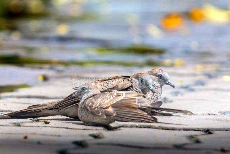 Tres palomas en piso del cemento en fondo borroso fotos de archivo