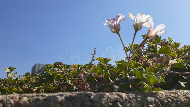 Tres pequeñas flores brillantes imágenes de archivo libres de regalías