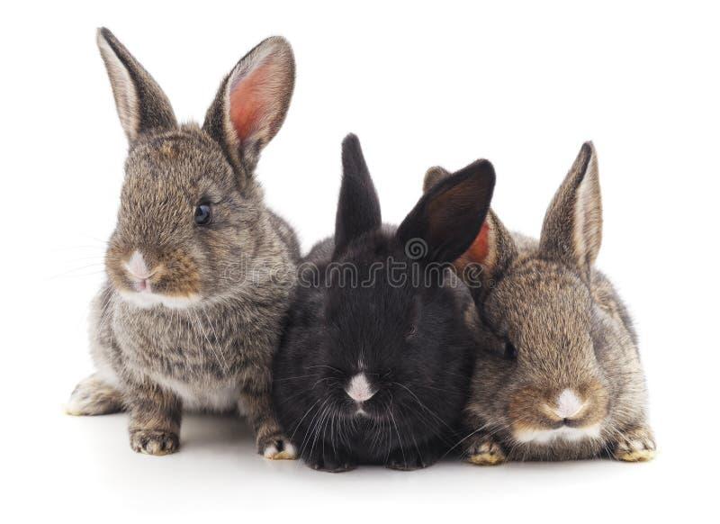 Tres pequeños conejos foto de archivo