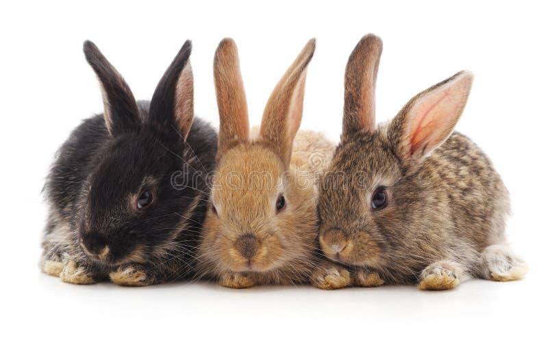 Tres pequeños conejos foto de archivo libre de regalías