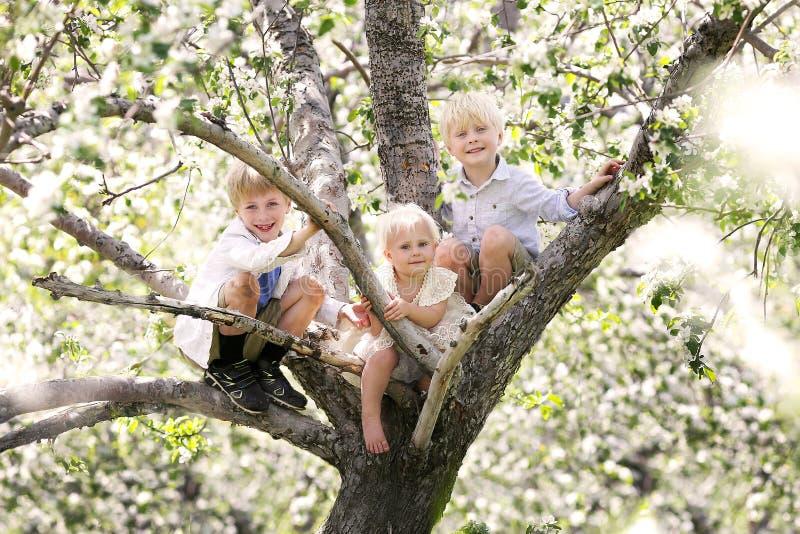 Tres pequeños niños lindos que suben en un manzano floreciente fotografía de archivo