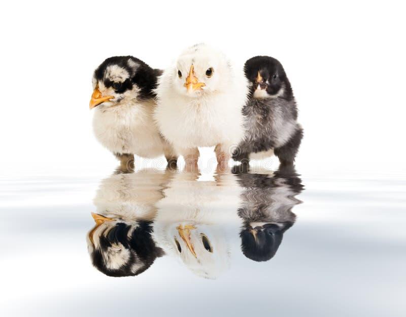 Tres pequeños pájaros imágenes de archivo libres de regalías