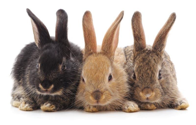 Tres peque?os conejos foto de archivo