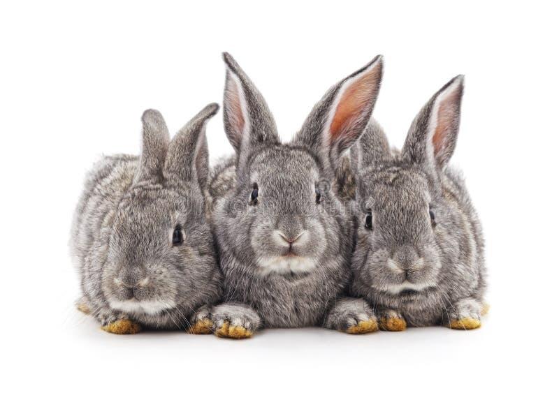 Tres peque?os conejos imagenes de archivo