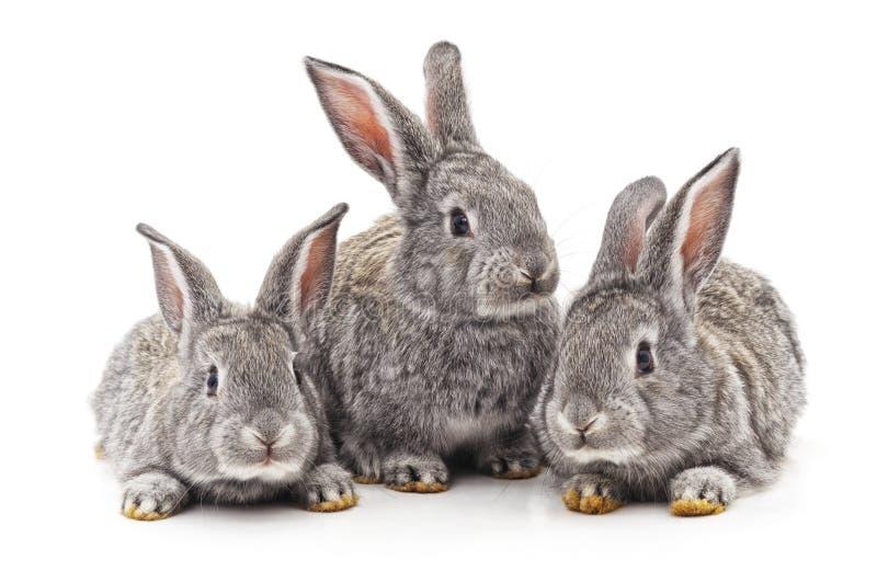 Tres peque?os conejos imagen de archivo