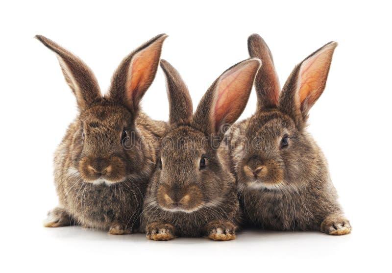 Tres peque?os conejos fotos de archivo