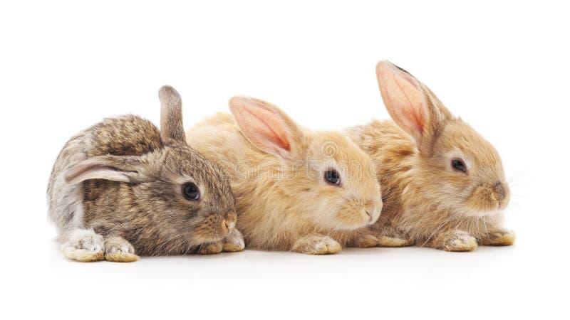 Tres peque?os conejos fotografía de archivo libre de regalías