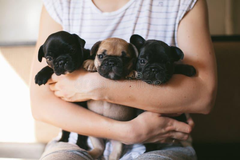Tres perritos del dogo franc?s imagenes de archivo