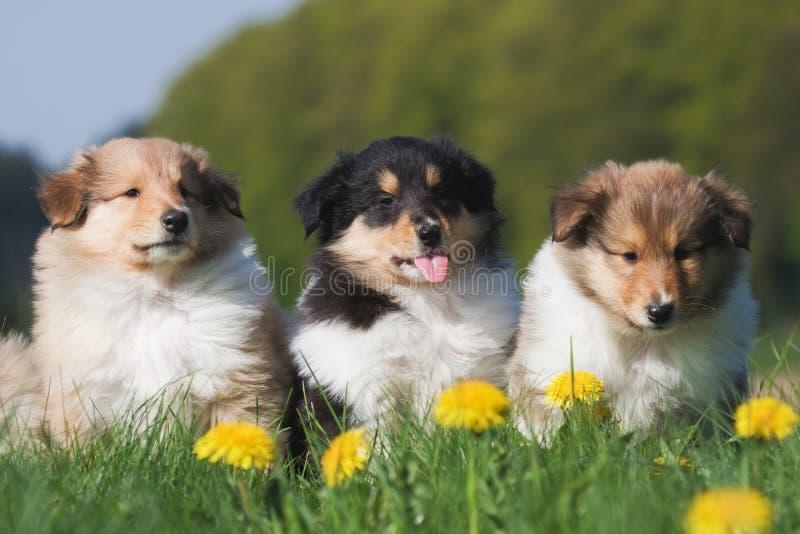Tres perritos en una fila imagen de archivo