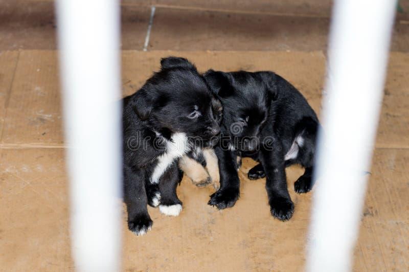 Tres perritos tristes en su casa en el refugio imagenes de archivo
