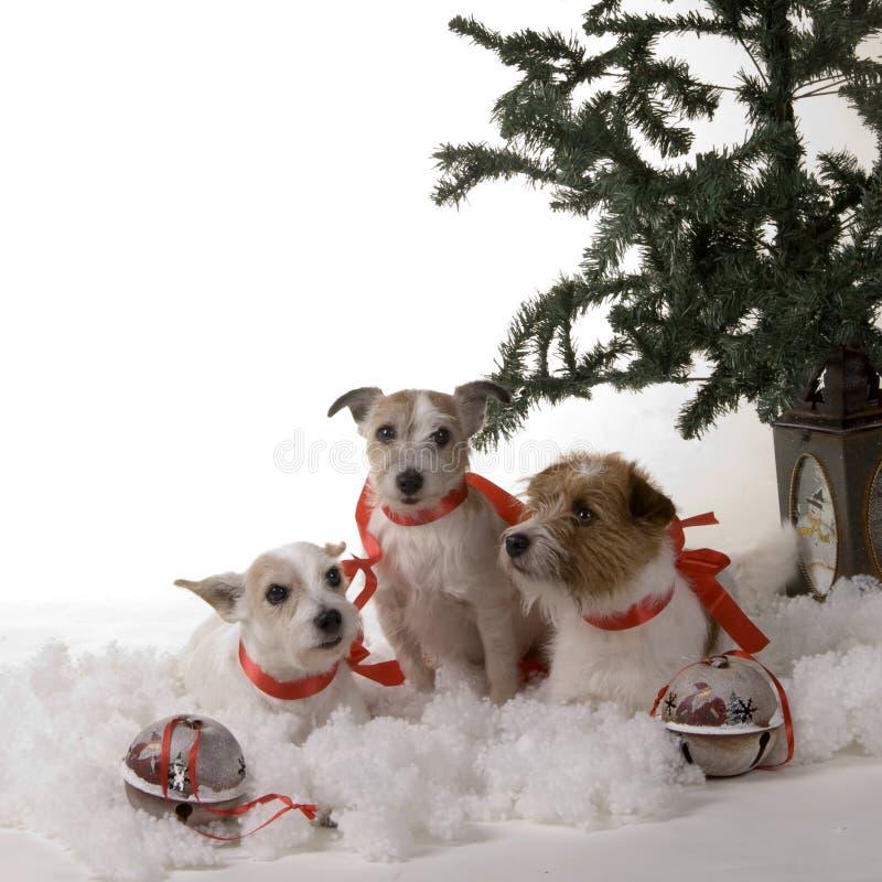Tres perros fotos de archivo