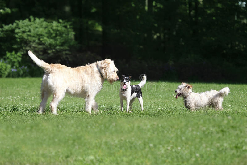 Download Tres perros foto de archivo. Imagen de tres, animal, juventud - 41913424