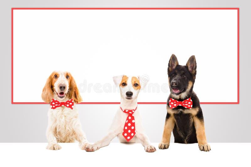 Tres perros divertidos de la oficina imágenes de archivo libres de regalías