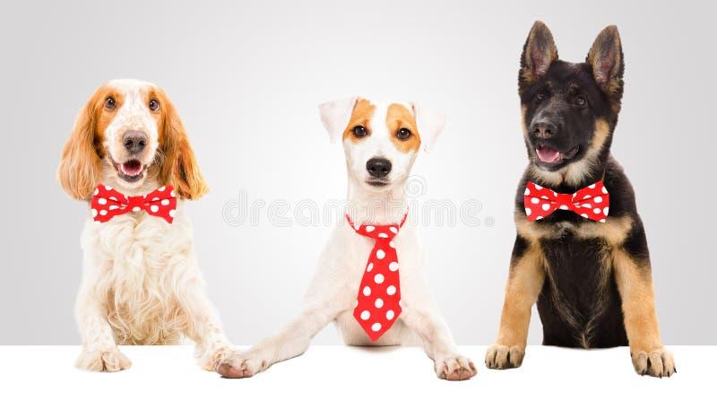 Tres perros divertidos foto de archivo