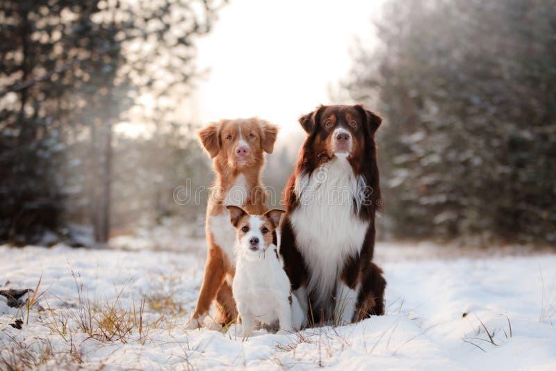 Tres perros que se sientan junto al aire libre en la nieve imagenes de archivo